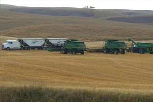 Harvest near Biggar Featured Photo from the Gallery